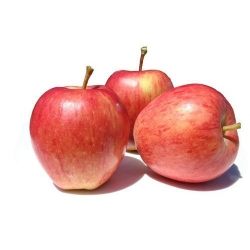 Royal Gala Apple Imported