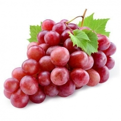 Grape Imported (Red Globe)
